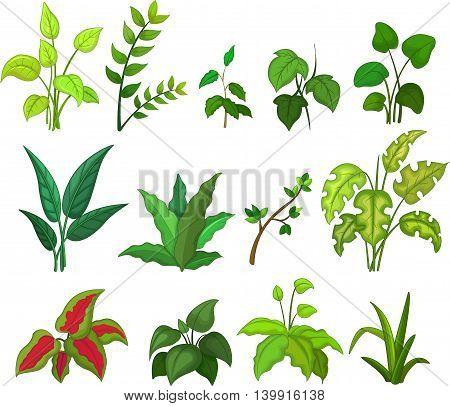 set of tropical plant for you design