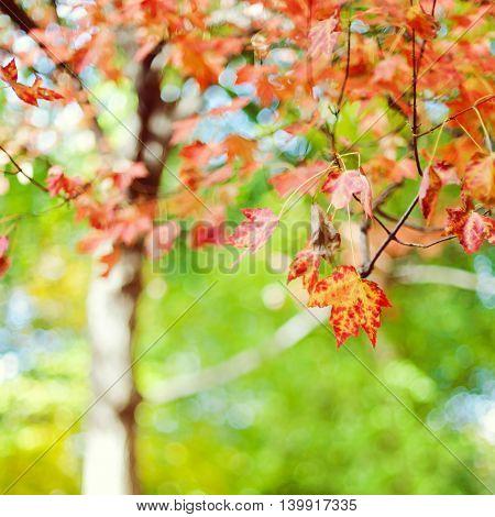 Autumn season tree in a park bokeh background