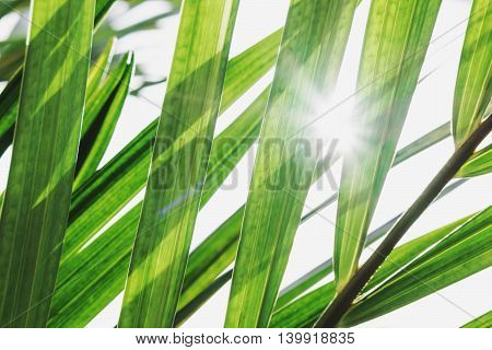 Fresh green leaves with sun rays, leaves abstract