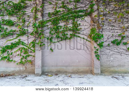 Old stone wall with leaves