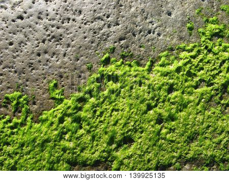 coastal rock with sea moss abstract background