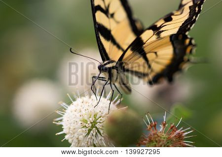 Butterfly feeding from a flower, little beautiful creatures