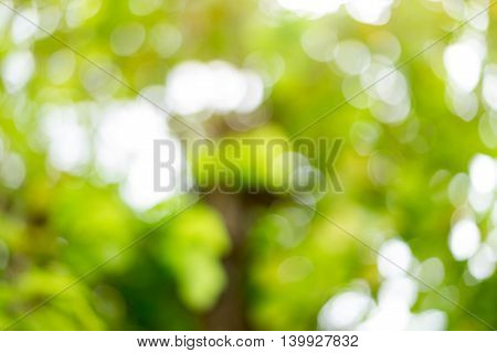 Blur natural green bright background with bokeh background