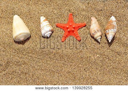 Sea shells with starfish on sand. Summer beach background.