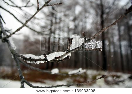 Ice set on tree stick in the morning from Hokkaido national park Japan