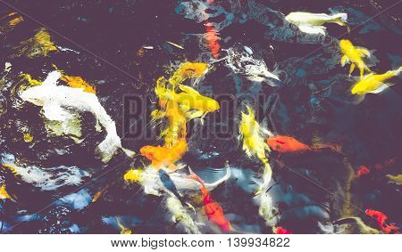 Vintage Filter : Crowd Of Koi Fish In Pond,colorful Natural Background,koi Is Symbolize Good Luck An