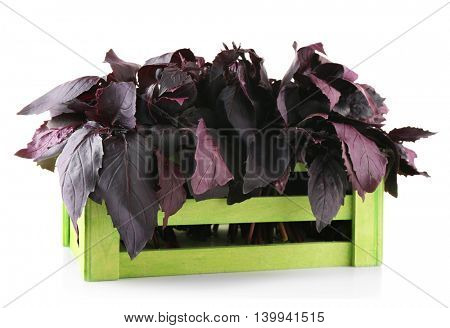 Fresh red basil in wooden box, isolated on white
