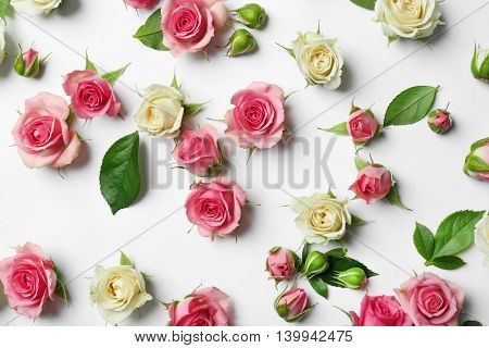 Assorted roses heads on white background