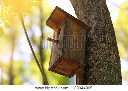 Tree with a  nesting box