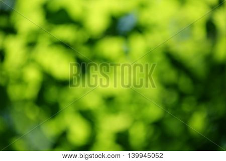 Green leaves blurred background