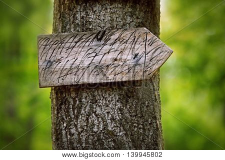 Tree with a sign and arrow