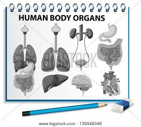 Human body organs on paper illustration