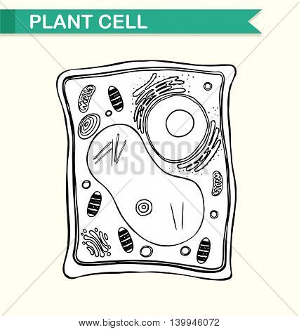 Diagram showing plant cell in black and white illustration
