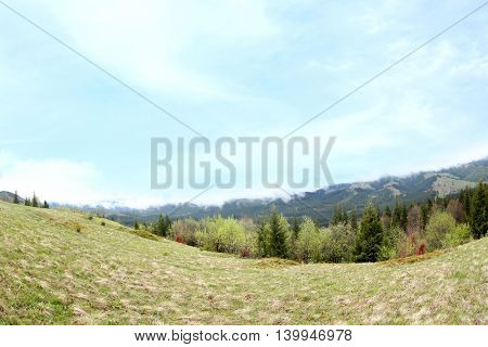 Summer forest on mountain slopes