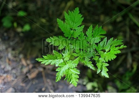 Wild green leaf in a forest
