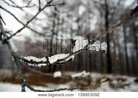 Ice set on stick tree in national park at Hokkaido Japan