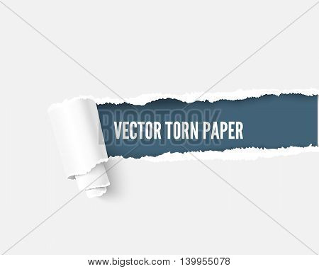 Torn paper with scroll and space for your message, realistic vector illustration. Torn paper with teared edges