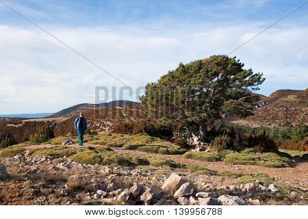 oak tree and a mountaineer in the high of a mountain