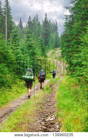 Group of hikers on a path through the forest in the mountains. Group of tourists go with travel backpacks on road in pine forest. Active holidays in the mountains