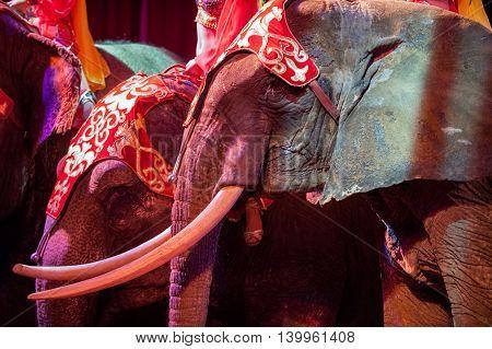 circus elephant on black background close up