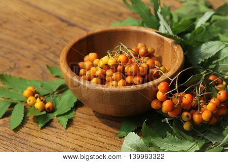 bunch of rowan berries in bowl .