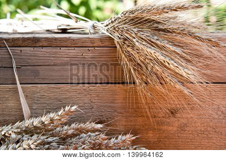 barley and wheat on the old wooden table
