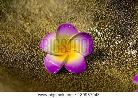 colorful flower plastic on brass and water