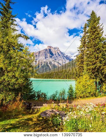 Solar cool morning. Blossoming glade in the forest on Emerald Lake. Yoho National Park, Rocky Mountains, Canada