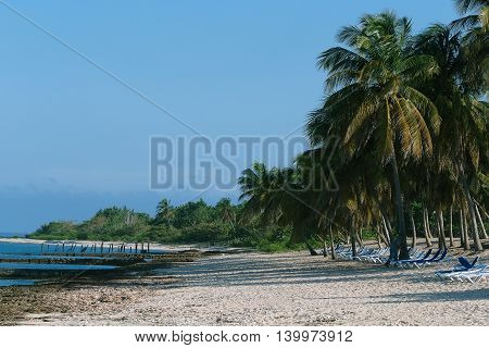 Cuba. Tropical beach with palms and white sand
