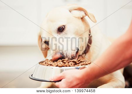 Feeding The Hungry Dog