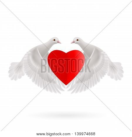 White two doves holds red heart in wings