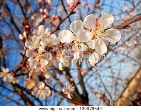 Spring - a romantic time of the year, it is the revival of all that is beautiful that nature gives us.