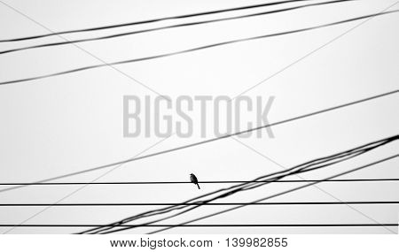 lonely bird on wire - monochrome style