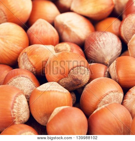 raw hazelnuts in a shell, food background