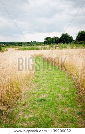 Path Through Long Grass In A Sunny Summer Meadow