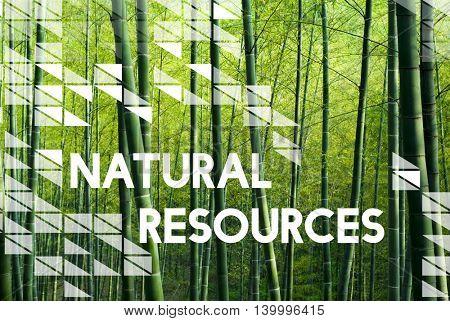 Natural Environment Resources Nature Plants Concept
