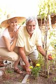 picture of senior men  - Senior Couple Relaxing In Garden - JPG