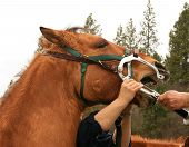 Equine Dental Care