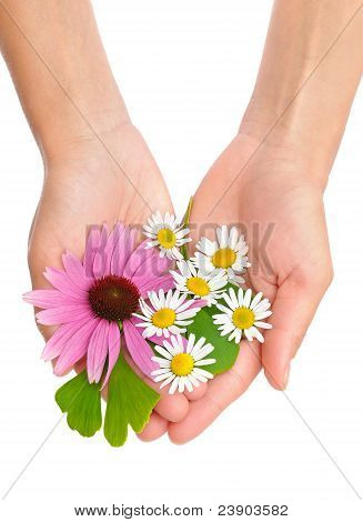 Hands of young woman holding herbs
