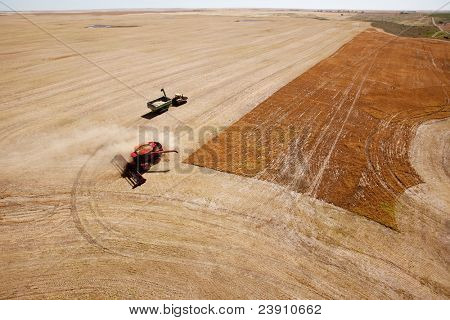 A grain cart waits for a combine on a prairie lentil field