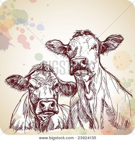 two cows hand draw sketch & color paint background. Bitmap copy my vector ID 70185781