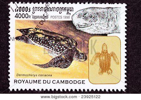 Canceled Cambodian Postage Stamp Swimming Leatherback Sea Turtle, Dermochelys Coriacea