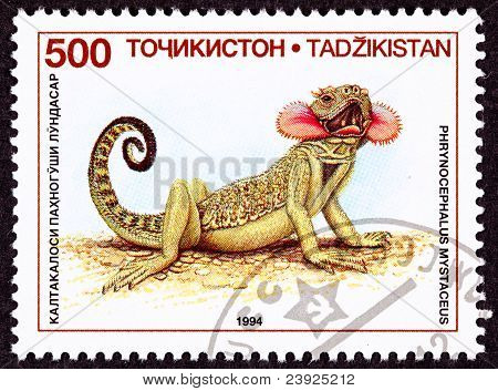 Canceled Tajikistan Postage Stamp Neck Flap Agamid Lizard Phrynocephalus Mystaceus