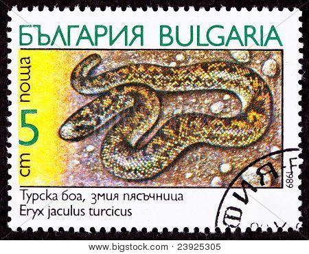 Bulgarian Postage Stamp Javelin Sand Boa Constrictor Snake, Eryx Jaculus