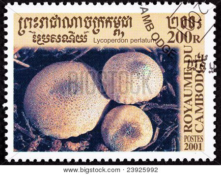 Canceled Cambodian Postage Stamp Clump Common Puffball Mushroom Lycoperdon Perlatum
