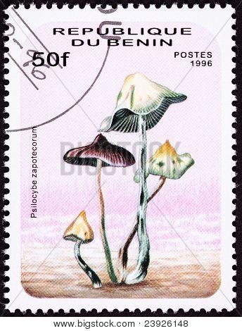 Canceled Benin Postage Stamp Psilocybin, Psychedelic Mushroom Psilocybe Zapotecorum