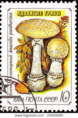 Sowjetrussland Briefmarke Amanita Pantherina Panther Cap Mushroom abgebrochen