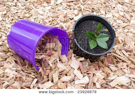 mulch potted plants and pots