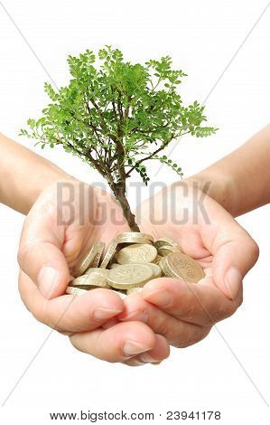 Money Tree Growth