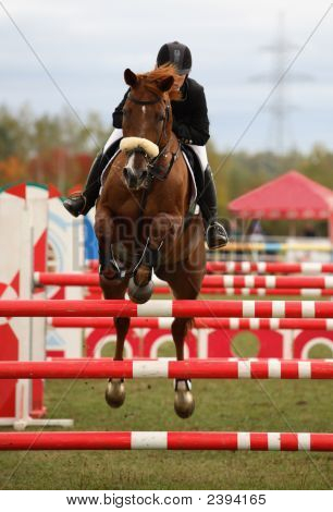 Horse And Rider In Show Jumping Competition
